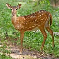 Kaziranga - Nameri - Pobitora Wildlife Sanctuary Tour
