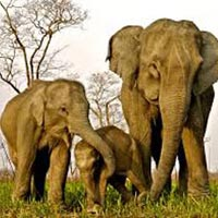 Manas National Park 03 NIGHTS / 04 DAYS Tour