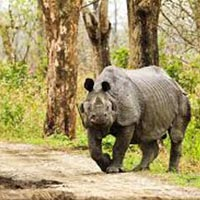 Manas National Park – Kaziranga National Park 04 Nights / 05 Days Tour