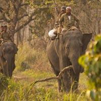 Dibru Saikhowa National Park – Gibbon Wls – Kaziranga Np – Nameri Np – Manas Np Tour