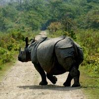 Wildlife Tour Of Assam Tour