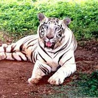 Orissa Wildlife Tour
