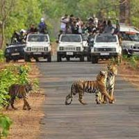 Tadoba National Park Tour