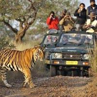 Rajasthan - Tiger Safari Tour