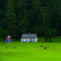Glimpses Of Himachal Tour