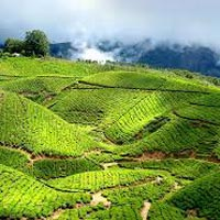 Splendid Kerala Tour