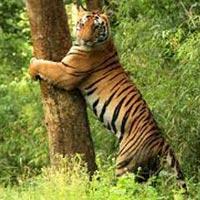 Exotic Tour of Odisha