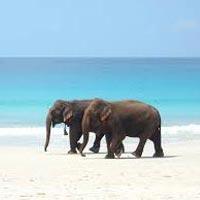 Discover Andaman's Tour
