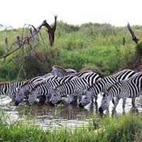 06 Nights & 07 Days Adventurous Kenya Tour