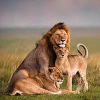 5N/6D Kenya Package