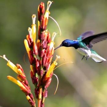 Gujarat Bird Watching Tour