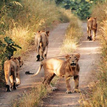 Gujarat With Wildlife Tour