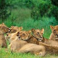 Safari Of Gujarat Tour