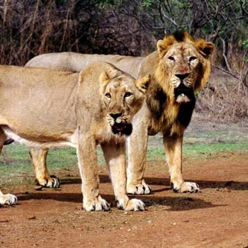 Gujarat Wild Life Tour Package