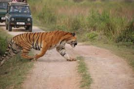 Dibrughar Aloo Dapo Makhyo Majuli Kaziranga Mon Tour
