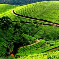 Munnar-Thekkady Best Offer