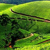 Munnar-Thekkady Best Offer