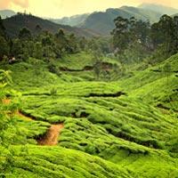 Kerala Greenary Package
