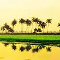 Delightfull Kerala