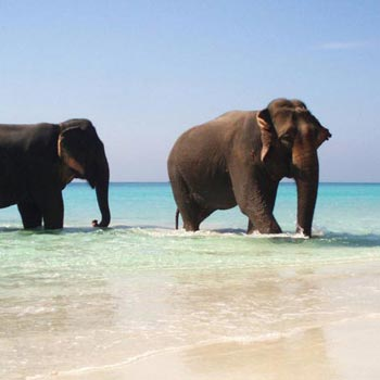 7 Nights 8 Days Andaman Special Family Tour Package