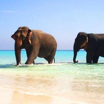 Havelock Island - Elephanta Beach