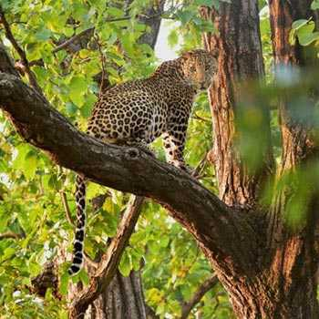 Adventure India - Wildlife Escapades