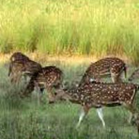 Natural wonders in Madhya Pradesh Tour