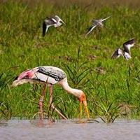Bird Watching Tour Of Odisha Tour