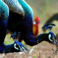 Debrigarh Wildlife Sanctuary Tour