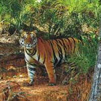 Satkosia Wildlife Sanctuary Tour