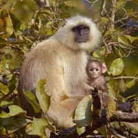 Wildlife Tour in Madhya Pradesh Tour
