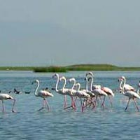 Wildlife Tour in Odisha