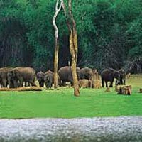 Wildlife Tour of Chhattisgarh.