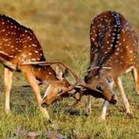 Tribal, Wildlife and Temple Tour of Madhya Pradesh