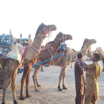 Pushkar Camel Fair And Tribal Tour Of Rajasthan Tour