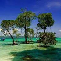 Andaman Tour  8 Days 7 Nights