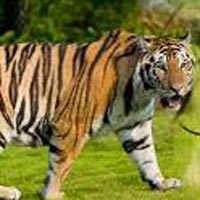 Delhi-Corbett National Park Weekend Tour