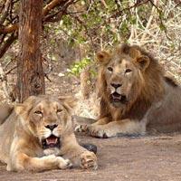 Gujarat Wildlife Tour I (14Nights / 15Days)