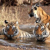 Jim Corbett 3 Nights/4 Days Tour