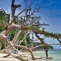 Andaman Economy Tour