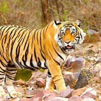 Ranthambore Extension from Jaipur Tour