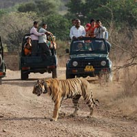 Tiger reserve tour