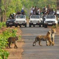 Rajasthan Tiger Safari Tour
