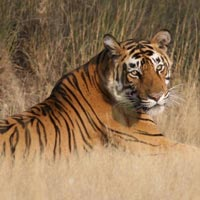 Ranthambore Tiger Safari Tour