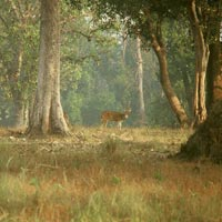 Kanha Wildlife Tour