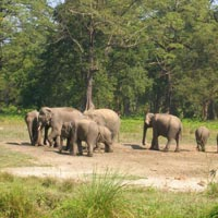 Rajaji Weekend Tour