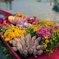 Amazing Kashmir Tour Package ( 5 Nights / 6 Days )