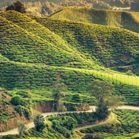 Romantic Darjeeling Tour Package ( 3 Nights / 4 Days )