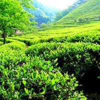 Amazing Darjeeling & Gangtok Tour Package ( 4 Nights / 5 Days )