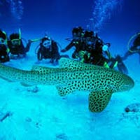 Best Andaman Tour With Havelock